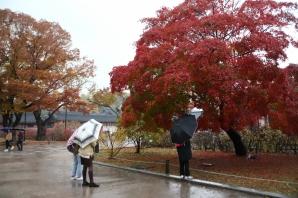 가을비,그리고 단풍..(창덕궁  11월13일)