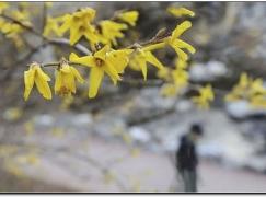 봄날은 간다