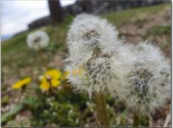 꽃은 그리움이다